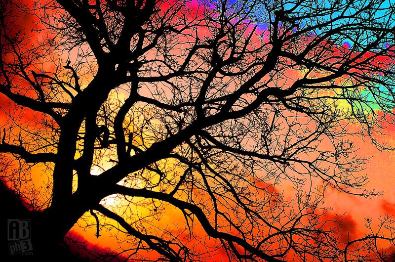Foto_albero_Fonte_del_Cerro
