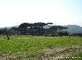 Baratti, Piombino (LI) - La pineta del golfo di Baratti vista dal prato