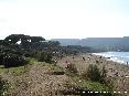 Baratti, Piombino (LI) - La pineta secolare lambisce la spiaggia di sabbia