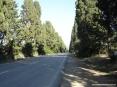 Bolgheri (LI) - La strada che unisce San Guido a Bolgheri