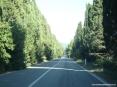 Bolgheri (LI) - I cipressi che a Bolgheri alti e schietti van da San Guido in duplice filar...