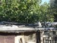 Bolgheri (LI) - Gatti al sole della campagna toscana
