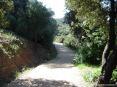 Cala Violina (GR) - Il sentiero è largo, ben battuto e pulito. Il percorso è molto curato e ben mantenuto