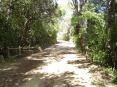 Cala Violina (GR) - Il sentiero che porta a Cala Violina da Portiglioni è ben segnato, molto ben mantenuto. Il percorso si alterna fra tratti all