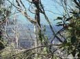 Cala Violina (GR) - Fra gli arbusti della macchia mediterranea si scorge un mare limpido e incontaminato