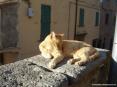 Castagneto Carducci (LI) - Di fronte alla chiesa principale un micetto gode del tepore del sole toscano
