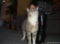 Castiglione della Pescaia (GR) - Un bellissimo gatto accoglie con le fusa i turisti
