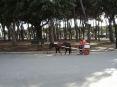 Forte dei Marmi (LU) - Piazza Marconi oltre che con le macchinie elettriche può essere percorsa in calesse con i pony.