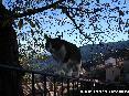 Gatti toscani - Equilibrismi a Marciana Isola d