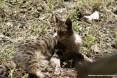 Gatti toscani - Una gatta all