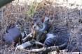 Gatti toscani - Un micione si riposa su un prato all