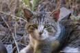 Gatti toscani - Primo piano di un bel gatto tigrato dagli occhi verdi a Piombino - Fotografia gatto micio Toscana