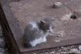 Gatti toscani - Camilla una micetta nata all