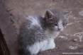 Gatti toscani - Camilla una micetta nata da poche settimane in uno stabilimento industriale di Piombino - Fotografia gatto micio Toscana