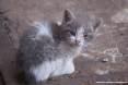 Gatti toscani - La micetta Camilla nata in uno stabilimento industriale di Piombino - Fotografia gatto micio Toscana