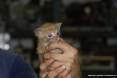 Gatti toscani - Un simpatico micino tigrato rosso dagli occhi blu nato in uno stabilimento industriale di Piombino - Fotografia gatto micio Toscana