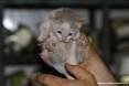 Gatti toscani - La micetta Camilla mostra le zampine - Fotografia Piombino gatto micio Toscana