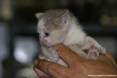 Gatti toscani - La gattina Camilla fra le dita di una mano - Fotografia Piombino gatto micio Toscana