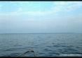 Isola di Pianosa (LI) - Avvicinandosi dal mare Pianosa appare quasi irreale. La superficie e la costa sono completamente piatte e si ergono dalle acque solo per pochi metri.