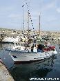 Marciana Marina (LI) - I piccoli pescherecci locali scaricano spesso ottimo pesce fresco sul molo tra l