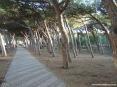 Marina di Cecina (Cecina Mare) (LI) - Le vie del lungomare si alternano con parchi sotto una fresca pineta attrezzata con panchine, altalene, giochi e giostre