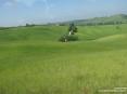 Monterchi (AR) - Alcuni casolari e fattorie spuntano fra i verdi prati solcati da strade bianche.