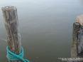 Torre del Lago Puccini, Viareggio (LU) - Un ragno tesse la sua tela fra due pali in legno di un moletto sul lago - Fotografia maggio 2009