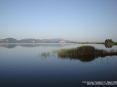 Torre del Lago Puccini, Viareggio (LU) - Panorama del lago di Massaciuccoli verso sud est. In primo piano arbusti lacustri spuntano dalle acque - Fotografia maggio 2009