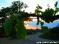 San Gimignano (SI) -